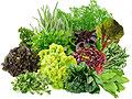 Зелень помогает регулировать аппетит
