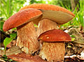 Способы сушки грибов