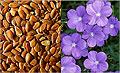 Семена льна сдерживают развитие рака