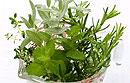Быстро снять нервное напряжение помогут лекарственные травы