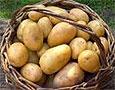 Развитие рака желудка можно предотвратить, употребляя картофель
