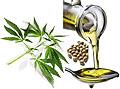 Конопляное масло полезно для здоровья