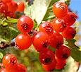 Сердечные растения: вспоминаем и используем