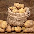 Как сохранить картофель зимой в городской квартире?