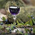 Черничное вино полезнее виноградных напитков