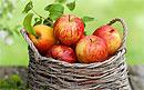 Яблоки - прививка от рака