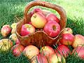 Какой фрукт поможет отсрочить старение?