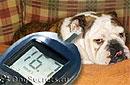 Удалось вылечить сахарный диабет у собак