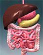 Как ухаживать за желудком