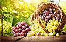 Медики рассказали о главной пользе винограда