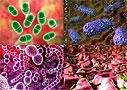 Создан антибиотик, к которому не смогут приспособиться бактерии