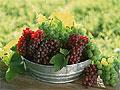 Виноград может спасти от возрастной макулярной дегенерации