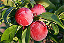 Лучший фрукт для омоложения