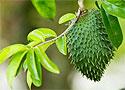 Назван фрукт, который «убивает» рак