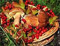 В 42% грибов и 30% ягод в Беларуси повышено содержание цезия-137
