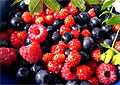 Дикие лесные ягоды могут помочь в лечении рака поджелудочной железы