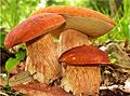 Ученые нашли в грибах противораковое соединение