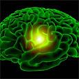 Умеренность в пище сохраняет мозг молодым
