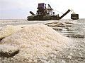 Исландцев 13 лет кормили промышленной солью