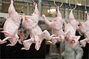 На Кубани уничтожили 14 тонн мяса инфицированного птичьим гриппом