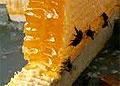 Мед снимает тревожность и улучшает память