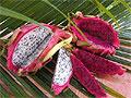 Тропические фрукты и их описание