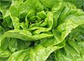 Зеленые салаты в упаковке могут быть опасны для здоровья