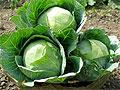 ТОП-5 овощей, которые полезнее вареными