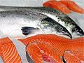 ГМО-лосось стал предметом жарких споров в Соединенных Штатах