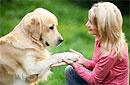 Собак удалось приручить благодаря человеческой пище
