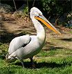 Россельхознадзор призывает срочно информировать ветслужбы о падеже диких и домашних птиц