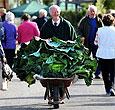 Британский садовод вырастил 27-килограммовую цветную капусту